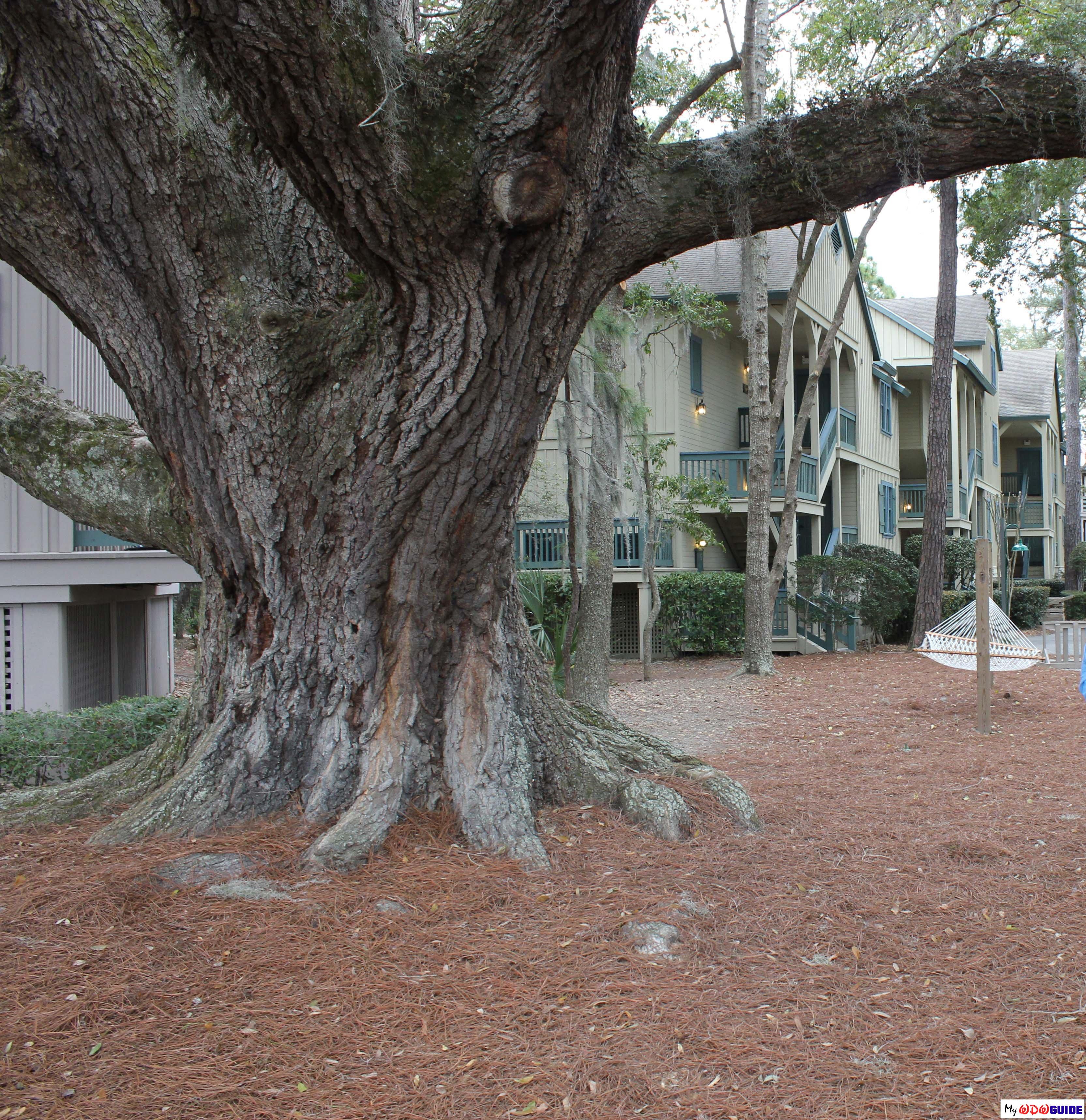 Disney Hilton Head Resort - DVC