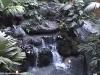 Polynesian, Water Falls